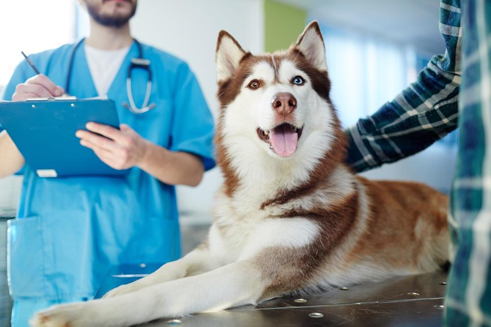 Ideal buyer for veterinary practice